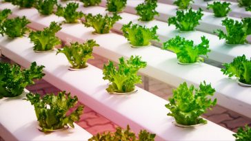 Ένας κήπος στο σαλόνι σου: το ελληνικό startup που αλλάζει τη σύγχρονη καλλιέργεια