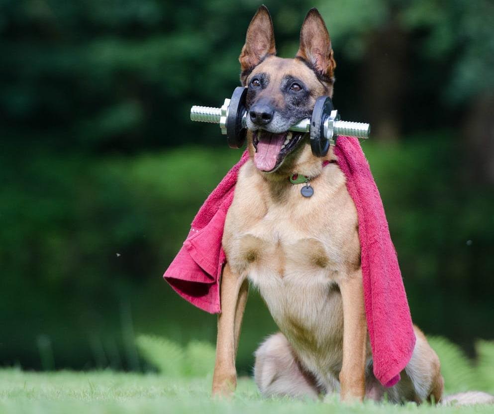 fit-dog-min