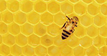 Μέλι-φάρμακο: Είναι αποτελεσματικό στην καταπολέμηση ιώσεων και κρυολογημάτων;