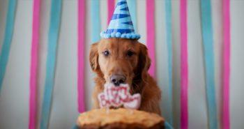 Πόσων ετών είναι ο σκύλος σας σε ανθρώπινα χρόνια; (Hint: Όχι x7)