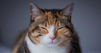 Επιστημονική απόδειξη: Τα βίντεο με γάτες είναι αγχολυτικά
